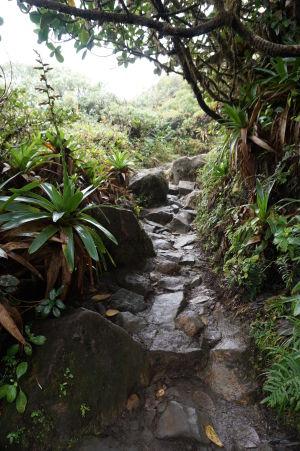 Cestička nahor je kamenistá a vlhká