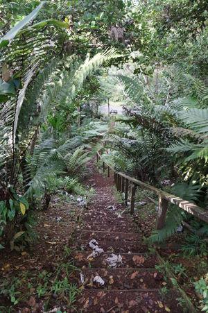 Prejazd horami stredom Grenady - Schody k jednému z trekov, ktoré sa tu dajú absolvovať