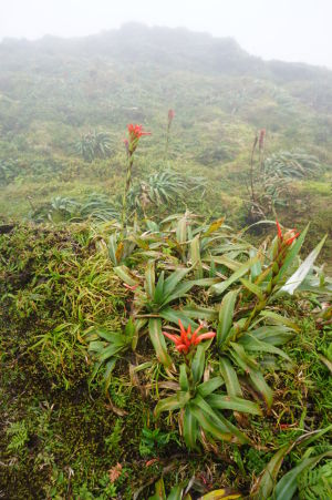 Cestou je možné zahliadnuť rôzne rastliny, ktorým vyhovuje vyššia nadmorská výška