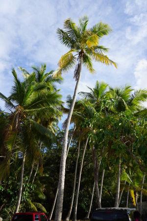 Palmy v zálive Hawksnest Bay
