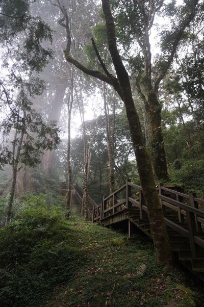 Schody v zahmlenom cyprusovom lese v Ališane