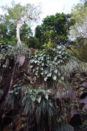 Okolie vodopádu Annandale bují zeleňou