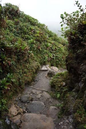 Cestička z vrcholu La Grande Soufriére