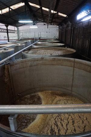 Rumová distilérka La Favorite - Nádrže s melasou vyprodukovanou z cukrovej trstiny, tu prebieha kvasenie