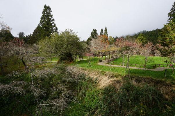 Cherry Blossom Park (Park čerešňových kvetov) v Ališane neďaleko stanice Zhaoping