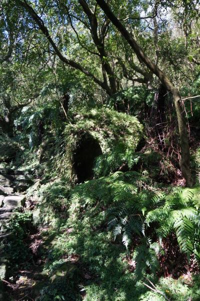 Turistický chodníček v Národnom parku Yangmingshan vedúci na vrchol hory Qixing - na začiatku vedie subtropickým lesom