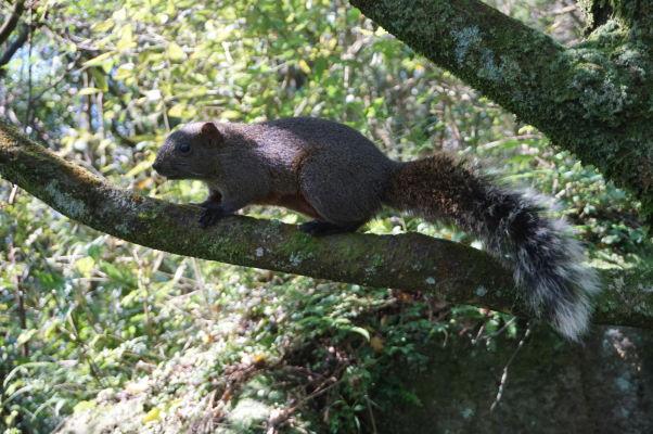 Veverička v Národnom parku Yangmingshan
