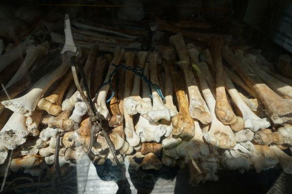 Vražedné polia Cheoung Ek - Vo vnútri pamätníka obetiam Červených Kmérov sú sklenené boxy s kosťami obetí režimu