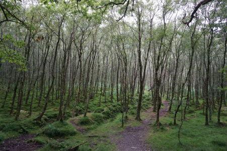 Malý lesík v Glendalough
