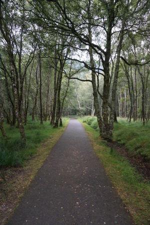 Malý lesík v Glendalough - Cestička od Dolného jazera k Hornému