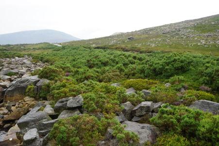 Kopce v Glendalough sú vo vyšších polohách už bez stromov - celkovo je v Írsku pomerne málo lesov