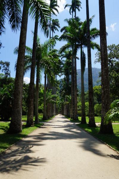 Botanická záhrada v Riu de Janeiro - palmová alej