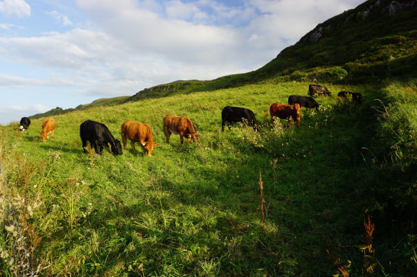 V okolí ostrova Carrick-a-Rede vládne dokonalá írska vidiecka idylka