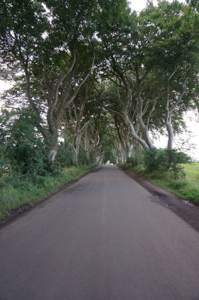 """Dark Hedges v Severnom Írsku - Filmová """"Kráľova cesta"""" z Game of Thrones"""