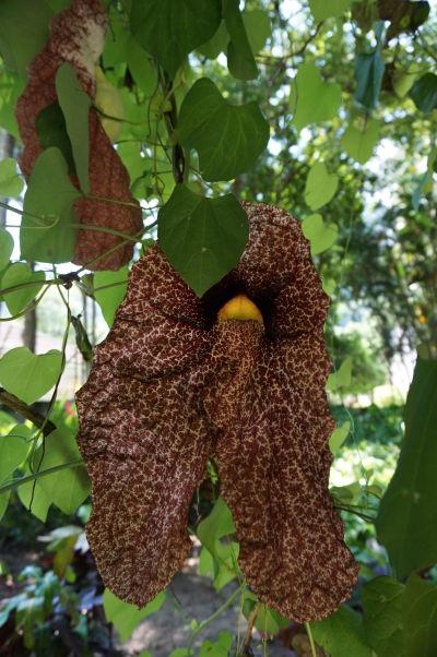 Botanická záhrada v Riu de Janeiro - je plná exotických kvetov