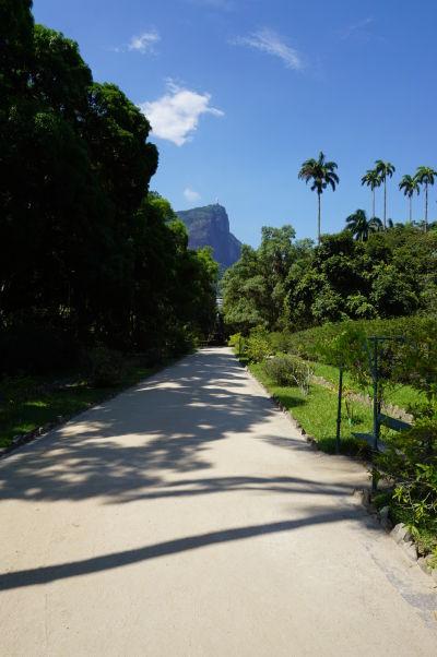 Botanická záhrada v Riu de Janeiro - v pozadí hora Corcovad so Sochou Krista Vykupiteľa