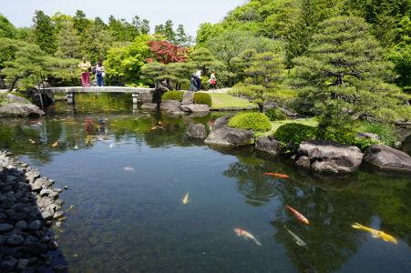 Jazierko nájdeme zrejme v každej japonskej záhrade, v Japonsku sú väčšinou plné poriadne vypasených farebných kaprov koi