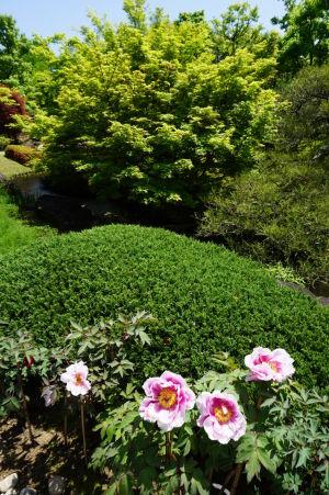 Japonská záhrada Kokoen