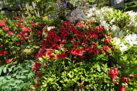 Japonská záhrada Kokoen hrá všetkými farbami