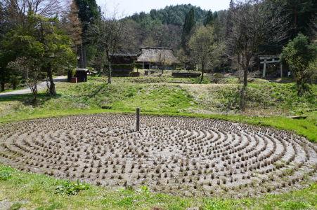 Kurumada - políčko ryže vysádzanej do kruhu