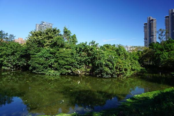 Park Daan v Tchaj-peji (biele fľaky sú volavky)