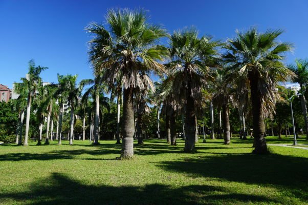 Park Daan v Tchaj-peji
