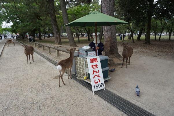 Stánok predávajúci sušienky pre miestne malé jelene, ktoré čakajú priamo pri zdroji na turistov, ktorí sa podvolia utratiť 150 jenov a kúpiť im dobrotu