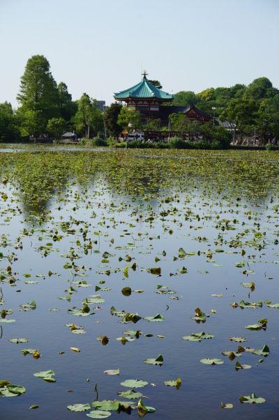 Jazero Šinobazu a svätyňa Šinobazunoike Bentendo v parku Ueno v Tokiu