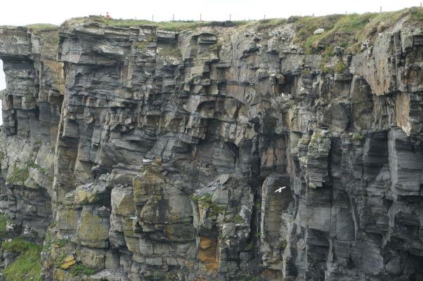 Vtáky obývajúce otvory v Moherských útesoch (Cliffs of Moher) na západnom pobreží Írska
