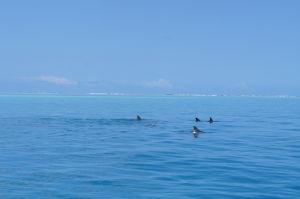 Pri potápaní sa na Zanzibare môžete stretnúť i delfíny... alebo že by to boli žraloky?