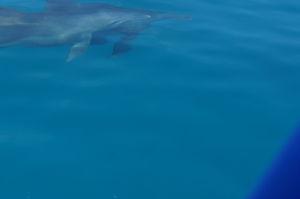 Pri potápaní sa na Zanzibare môžete stretnúť i delfíny... alebo že by to bol žralok?