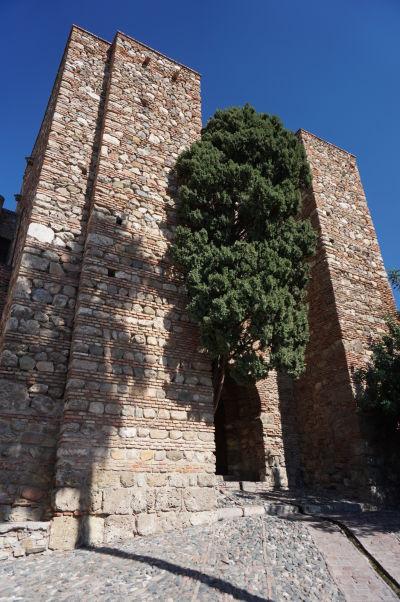 Strom vykukujúci z dverí vo veži pevnosti Alcazaba v Málage
