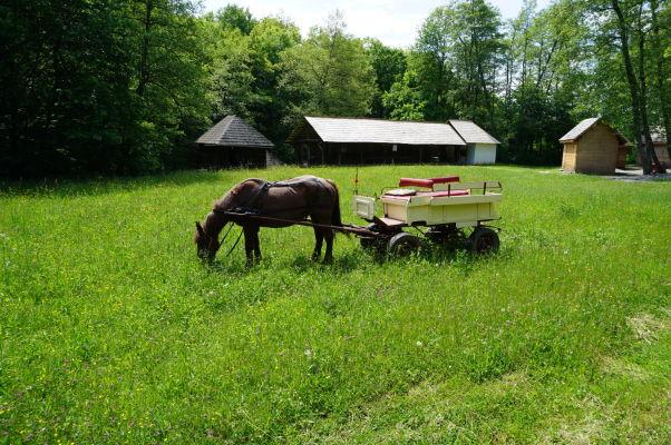 Rustikálnu atmosféru v skanzene v Sibiu dopĺňajú okrem drevených domčekov i domáce úžitkové zvieratá