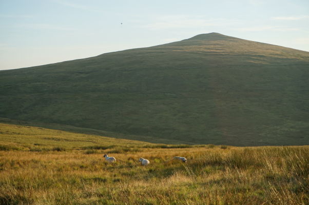Okolie hory Snaefell - najvyššieho vrchu ostrova Man - potulujú sa tu hlavne ovce