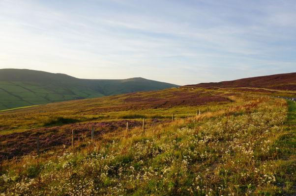 Okolie hory Snaefell - pri horskej ceste Snaefell Mountain Road rastú v lete typické fialové kvety