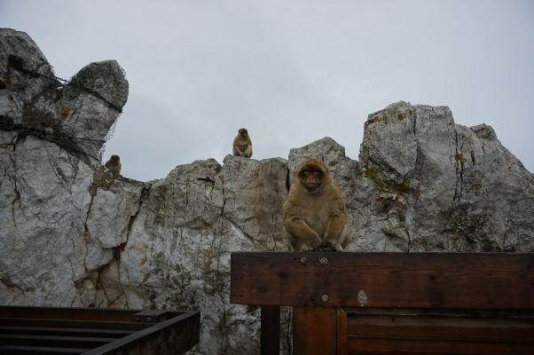 Stoické makaky na Gibraltári