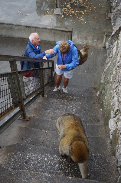 Makaky na Gibraltári sa turistov neboja a často ich používajú ako preliezačky alebo odrazové mostíky