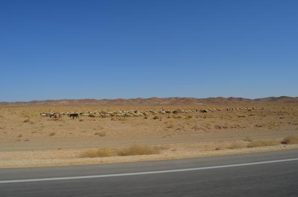 Pastieri v púšti v okolí Yazdu