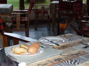 Pri raňajkách treba byť rýchly, lebo hladné farebné škorce čakajú v zálohe