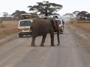 Slon a dodávky v Amboseli