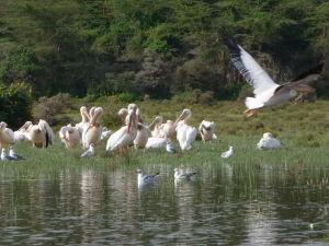 Jazero je domovom mnohých vtáčích druhov