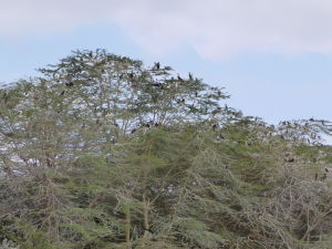 Vtáky v okolí jazera