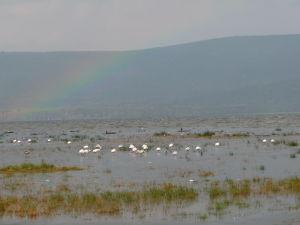 Plameniaky a dúha - gýčová panoráma jazera Nakuru