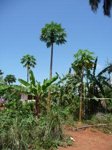 Všetky stromy a plody, ktoré sa na farme pestujú, som si bohužiaľ nebol schopný zapamätať