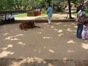 Anuradhapura - Ruiny