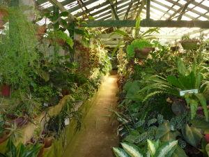 Sklenník v Kráľovskej botanickej záhrade
