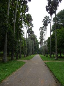 Palmová ulička v botanickej záhrade