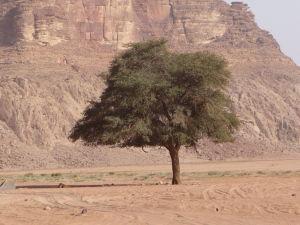 Aj vegetácia sa v púšti nájde