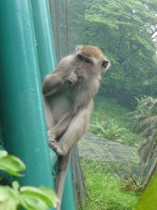 Opica sa zjavne nakŕmila aj sama