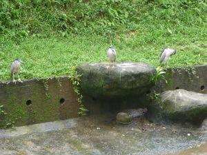 Vtáčí park v KL